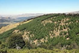 Imagen Incentivos Forestales